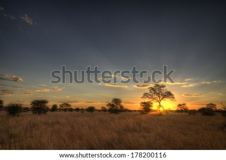 Kalahari Sunset - stock photo