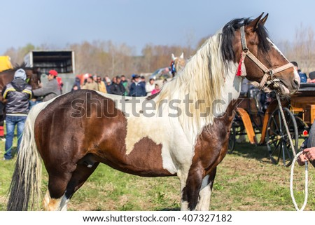 KALUGEROVO, BULGARIA - MARCH 19, 2016 - St. Theodore's Day or Horse day celebrations in Kalugerovo village, Bulgaria. The event includes horse beauty pageant and horse races called Kushii