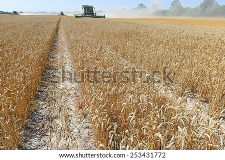Kalush, Ukraine - AUGUST 7: Modern  combine harvesting grain in the field near the town Kalush, Western Ukraine August 7, 2013  - stock photo