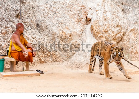 Kanchanaburi, Thailand - May 23, 2014:Unknown buddhist monk with a bengal tiger at the Tiger Temple  in Kanchanaburi, Thailand.The Temple was founded in 1994 as a sanctuary for wild animals.