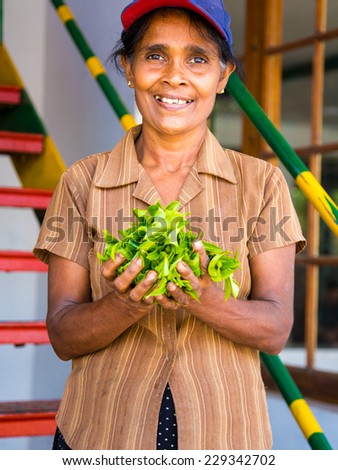 KANDY, SRI LANKA - APRIL 7: Tamil women tea pickers at the plantation April 7  2014 in Kandy, Sri Lanka.  - stock photo