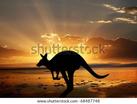 Kangaroo on the sunset - stock photo