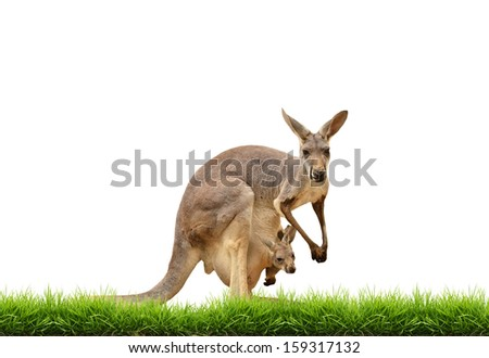 kangaroo with green grass isolated on white background - stock photo
