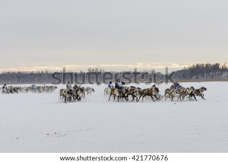 "Kar-Nat, Russia - February 23, 2016: National Nenets holiday ""Day of the reindeer herders' race on the reindeers, Kar-Nat, 22 February 2016"