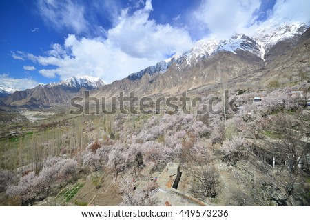 Karakorum mountains in spring time with cherry blossoms at Hunza valley , North Pakistan - stock photo