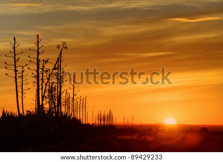 karroo sunrise,blouboskuil,graaf reinet,eastern cape,south africa