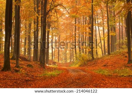 Kashubia, Poland/ Autumn forest. - stock photo