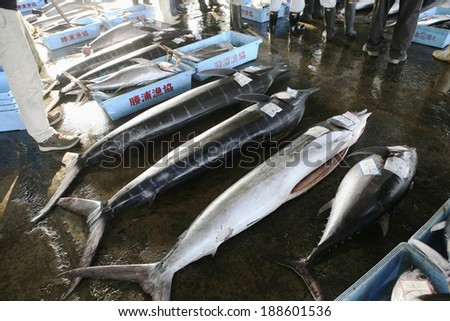 Katsuura swordfish fishing port