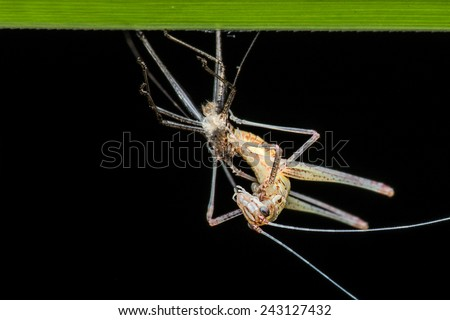 Katydid emerging at the night. Image has grain or noise and soft focus when view at full resolution. (Shallow DOF, slight motion blur ) - stock photo