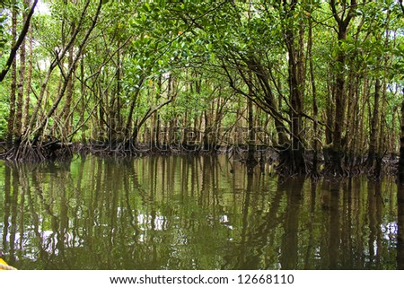 Kayaking in the mangrove jungle - stock photo