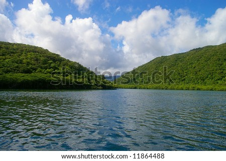 Kayaking on the mangrove river - stock photo