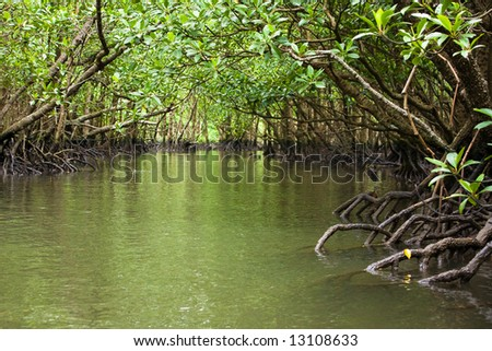 Kayaking through the mangrove jungle - stock photo