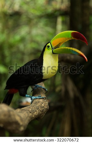 Pretty Toucan Stock Photos, Images, & Pictures | Shutterstock