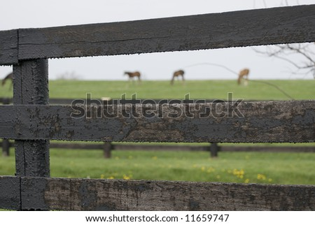 Kentucky Horse Farm near Lexington, KY USA - stock photo