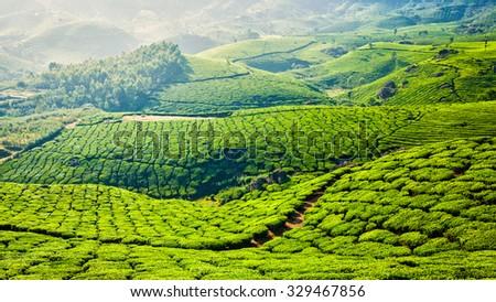 Kerala India travel background - panorama of green tea plantations in Munnar, Kerala, India - tourist attraction - stock photo