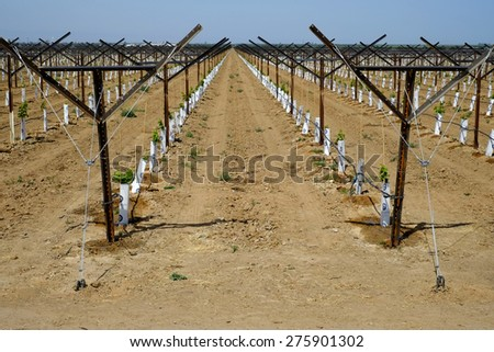 KERN COUNTY, CA - MAY 6, 2015: Despite the severe drought, this Central California farm has a newly-planted vineyard. The small grape plants are served with an extensive drip irrigation system.