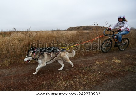 Kharkov, UKRAINE - November 15, 2014: Tatiana Filatova at Bikejoring with two dogs Women's 3100 m at Sled dogs dry land race Autumn Cup - 2014 - stock photo