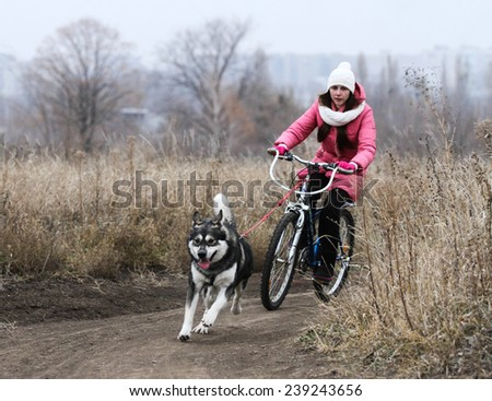 Kharkov, UKRAINE - November 15, 2014: Unidentified competitor at one dog Bikejoring Women's 3100 m at Sled dogs dry land race Autumn Cup - 2014 - stock photo