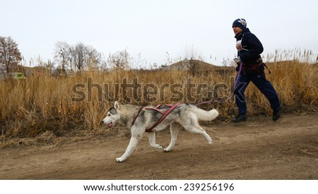 Kharkov, UKRAINE - November 15, 2014: Vladimir Golovin at canicross heats during Men's 3100 m at Sled dogs dry land race Autumn Cup - 2014 - stock photo