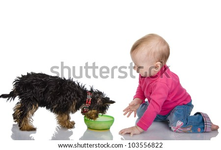 kid feeds a puppy. isolated on white background - stock photo