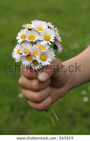 Kid hand offering a bouquet of daisies - stock photo