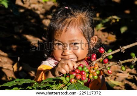 kid harvesting coffee berries - stock photo