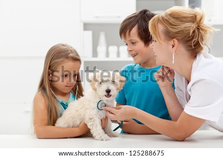Kids at the veterinary doctor with their pet - checking the dog with a stethoscope