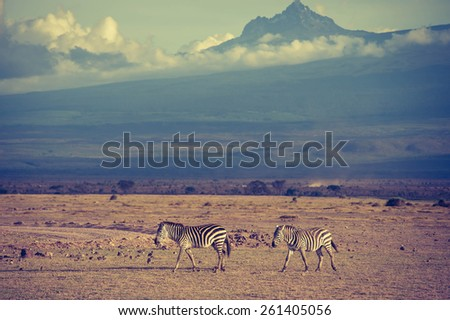 Kilimanjaro  - stock photo