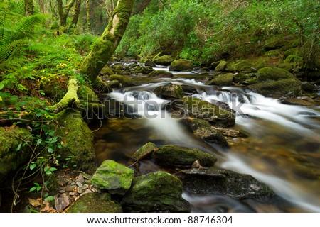 Killarney National Park creek - stock photo
