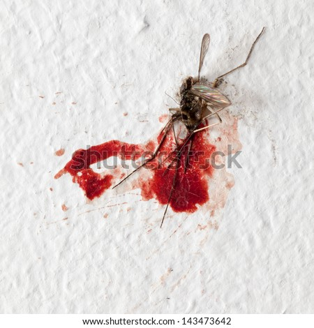 Killed mosquito with lots of blood on a wall - stock photo