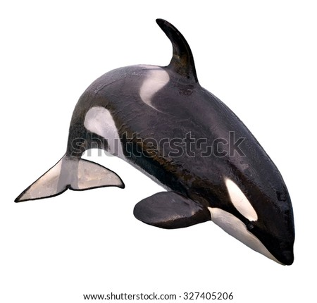 killer whale (Orcinus orca) jumping isolated on white background - stock photo