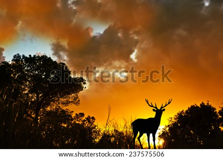 King of the mountain - stock photo