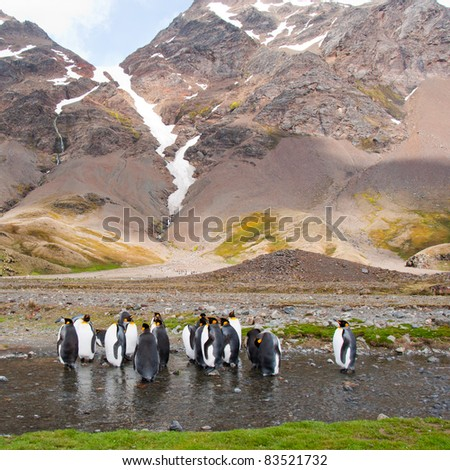 King Penguin Colony.Glacial mountains surround the colony in Fortuna Bay, South Georgia Island. - stock photo