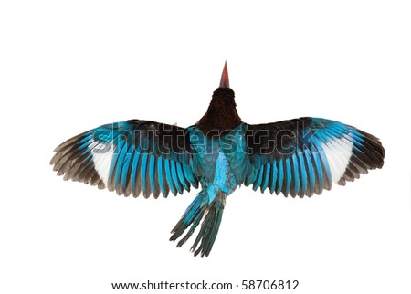 Kingfisher isolated on white background - stock photo