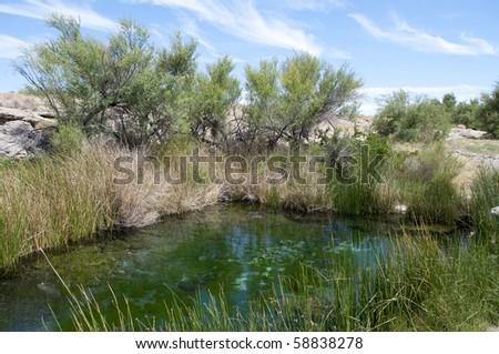 Kings Pool, Ash Meadows Wildlife Refuge, Home of Amargosa Springs Pupfish - stock photo