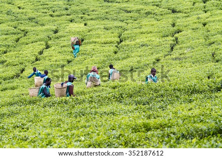 KINIHIRA, RWANDA- NOVEMBER 9: unidentified workers at a tea plantation on November 9, 2013. Tea is export item of Rwanda - stock photo