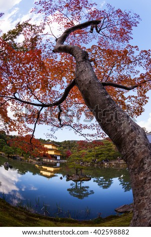 Kinkaku-ji (Temple of the Golden Pavilion, officially named Rokuon-ji) in the season of red maple trees (Momiji), Kyoto, Japan