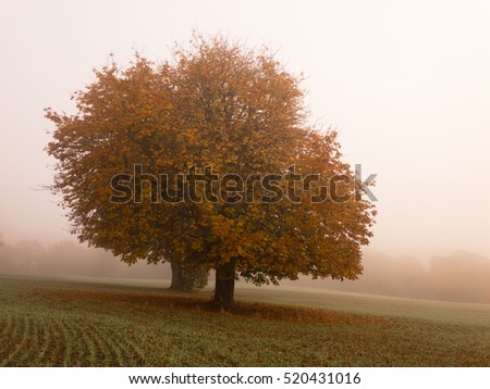 KIRKBY IN ASHFIELD, ENGLAND - OCTOBER 31: Trees in the fog, England. In Kirkby In Ashfield, Nottinghamshire, England. On 31st October 2016.