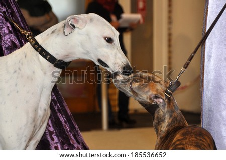 kissing dogs sniffing each other in their noses - stock photo