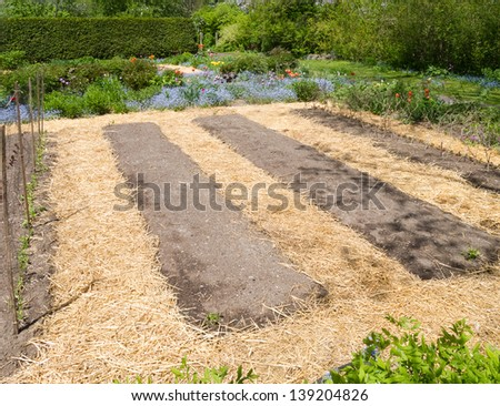 Kitchen garden in early spring with straw mulch - stock photo