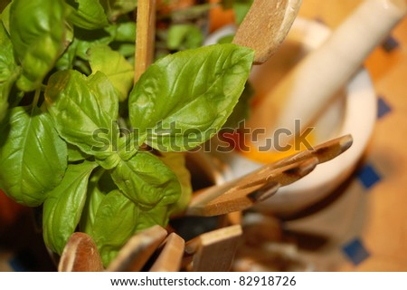 Kitchen table with Basil and Mortar - stock photo