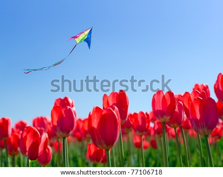 Kite and flowers