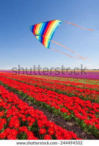 Kite flying over beautiful red tulips during day - stock photo