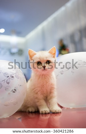 Kitten.  - stock photo
