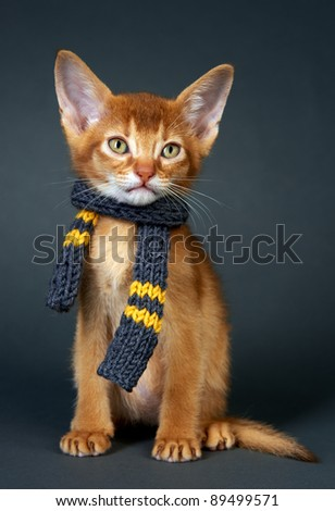 Kitten abyssinian. Age - 1 month - stock photo