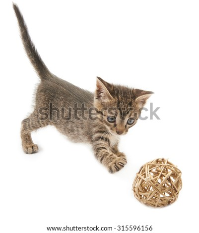 Kitten and a ball of straw on a white background