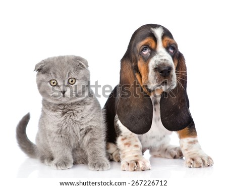 Kitten and basset hound puppy sitting together. isolated on white background - stock photo