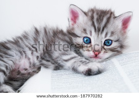 Kitten and book - stock photo