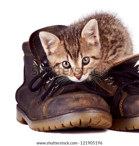 Kitten and boots on a white background - stock photo