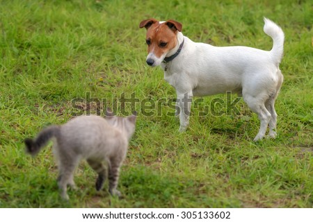kitten and dog on green lawn - stock photo